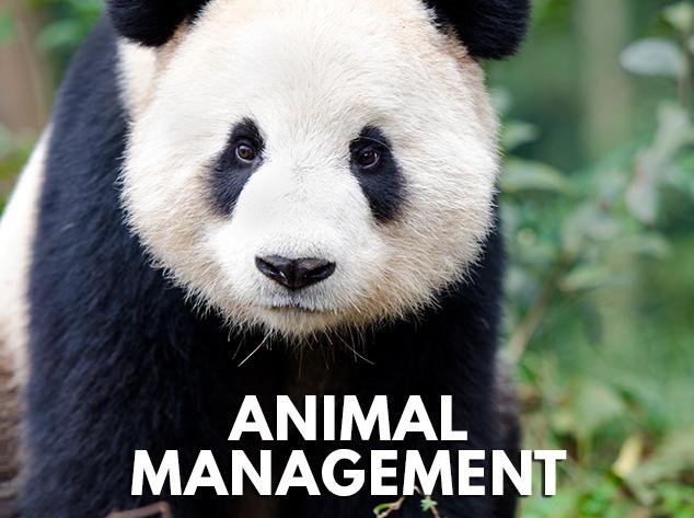 Animal Management