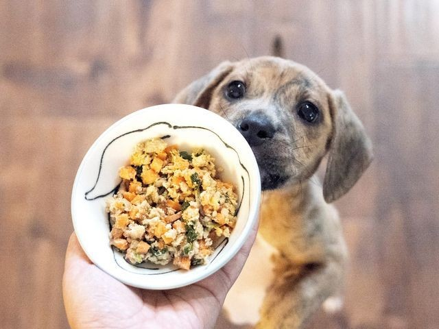 puppy food image