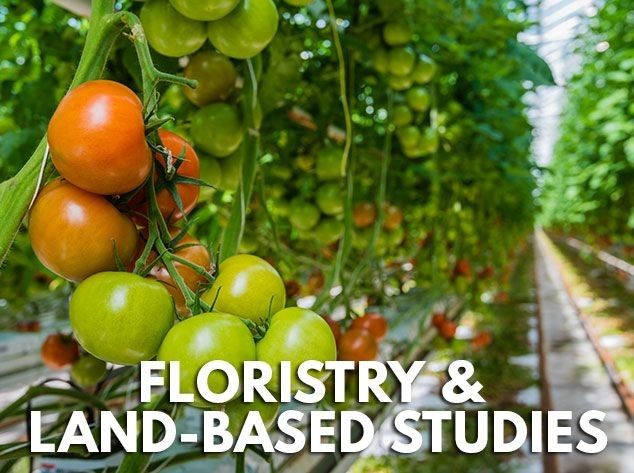 Floristry & Land-based Studies